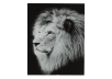 "16X20"" Black and White Lion Painting product photo"